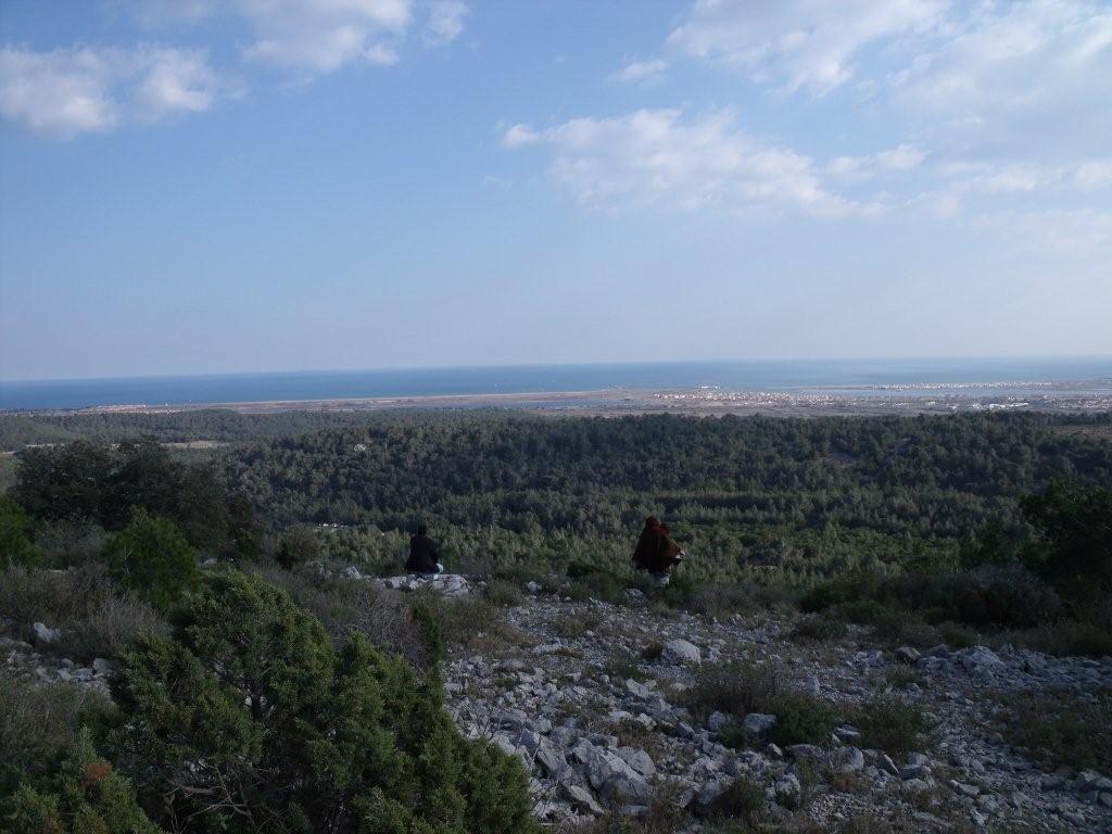 Le site magnifique la forêt face à la mer.